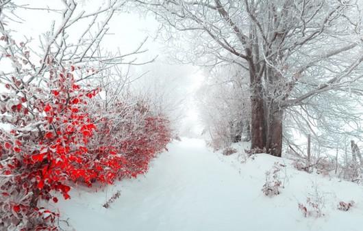 Зимняя аллея с деревьями