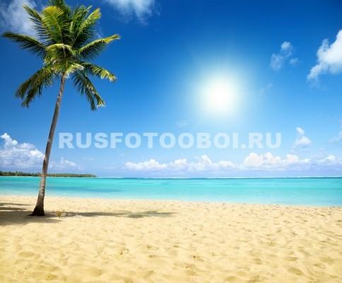 Пальма под солнцем