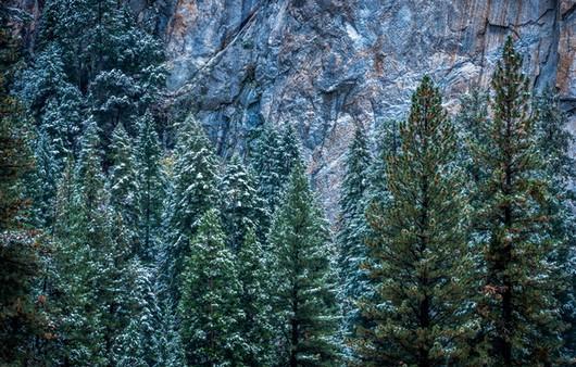 Зимний лес с высоты