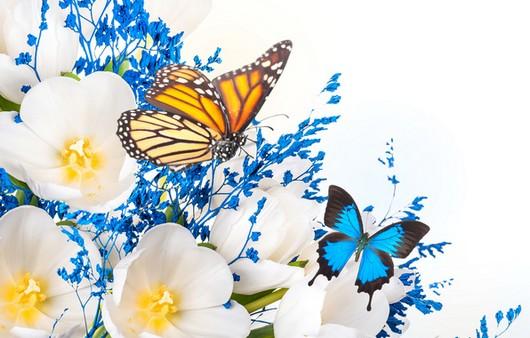 Бабочки на цветах жасмина