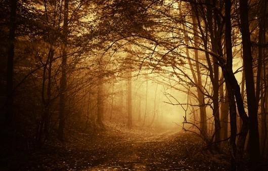 Тропинка в сумрачном туманном лесу