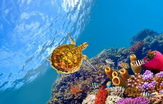 Подводный мир,черепаха в кораллах