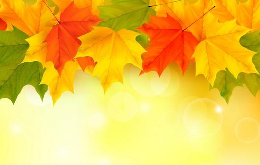 Фотообои Осенние кленовые листья