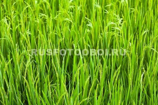 Яркая трава