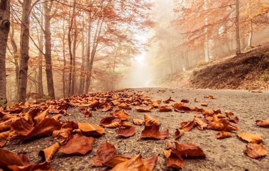 Фотообои Осенние листья на асфальте