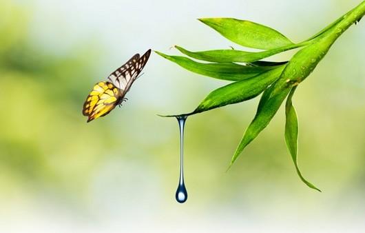 Фотообои Бабочка возле летящей капли воды