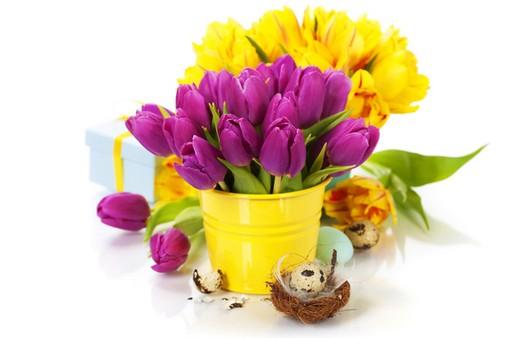 Букеты жёлтых и фиолетовых тюльпанов
