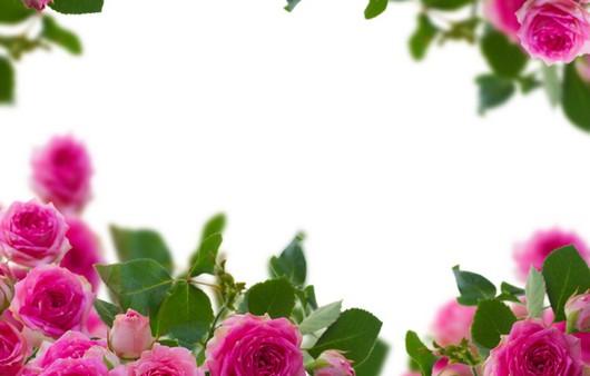 Фотообои Заставка для рабочего стола розы