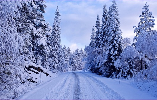 Фотообои Дорога по снежной дороге через лес