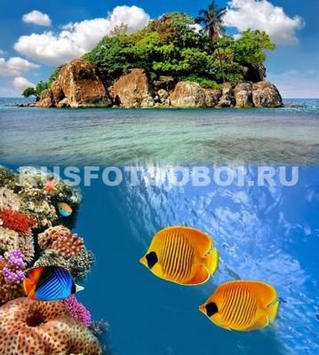 Две рыбки Бабочки