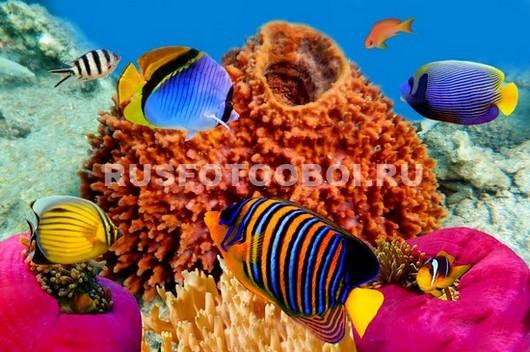 Рыбки около коралла