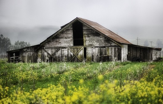 Старый заброшенный сарай на лугу