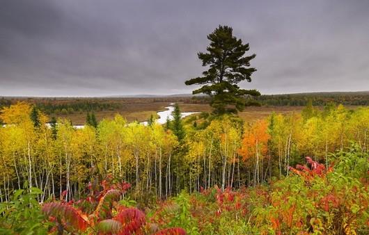 Фотообои Берёзовый лес