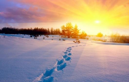Фотообои Следы на снегу