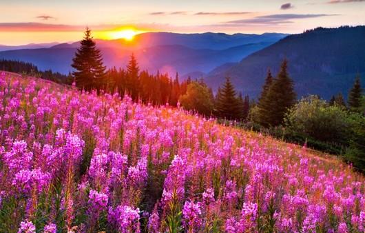 Цветущий луг в Норвегии