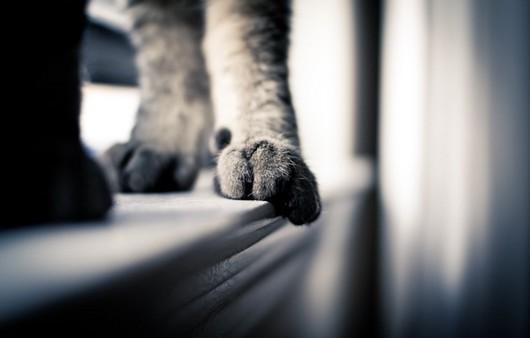 Кошачьи лапки на подоконнике