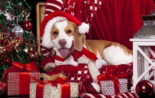 Фотообои Рождественский пёс