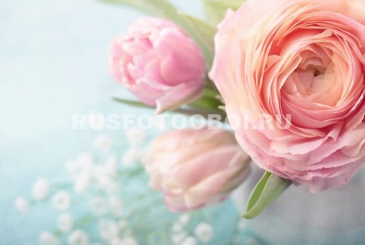 Открытый цветок пиона