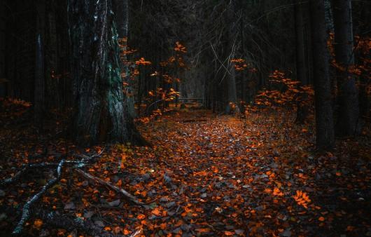 Фотообои Осенний дремучий лес