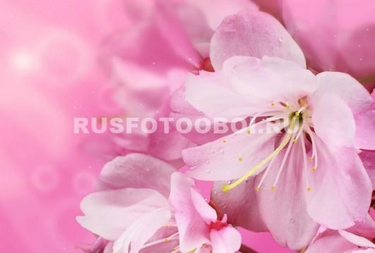 Розовые лилии на розовом