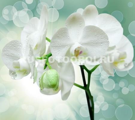 Блики с белыми орхидеями