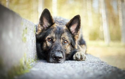 Взгляд брошенного пса