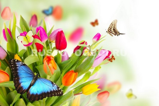 Бабочка на весеннем букете