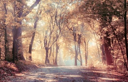 Фотообои Осеннее солнце в аллее