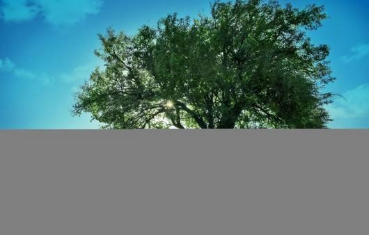Одинокое дерево под голубым небосводом