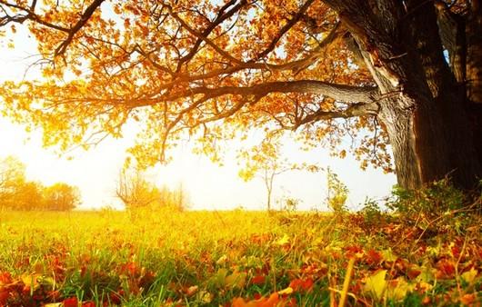 Фотообои Осенняя краса природы