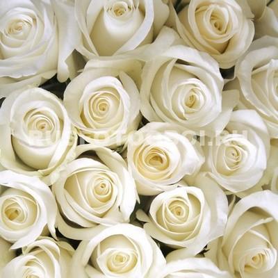 Букеет белых роз