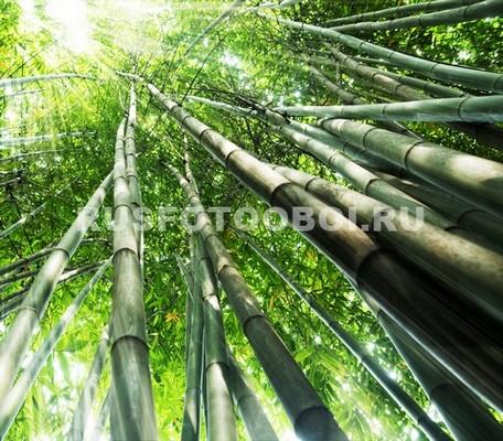 Фотообои Тонкие стволы бамбука