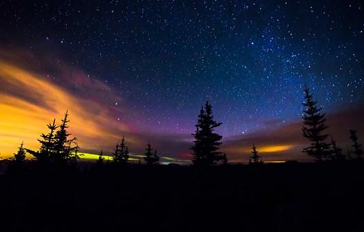 Фотообои Деревья на фоне звезд
