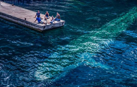 Силуэт кита