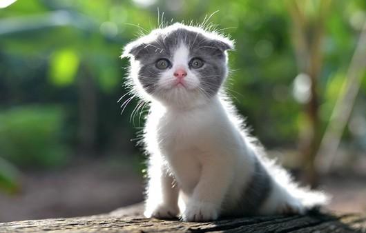 котенок лапочка