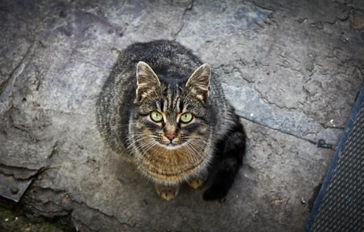 Зеленые глаза кошки