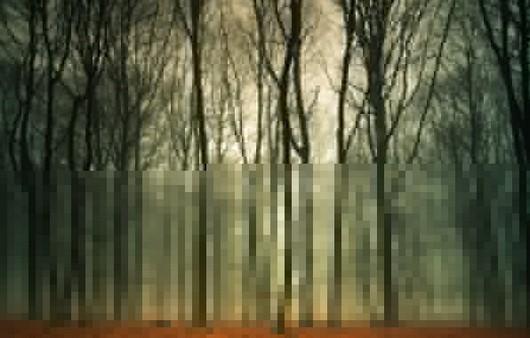 Фотообои Осенний туман