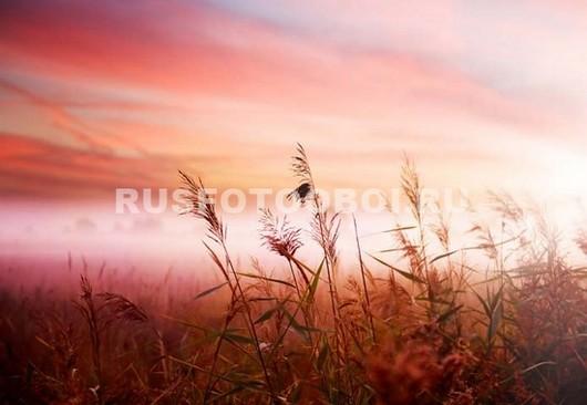 Закат на фоне поля