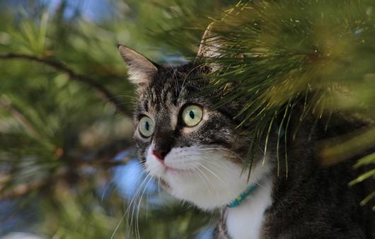 Кошка на ветках