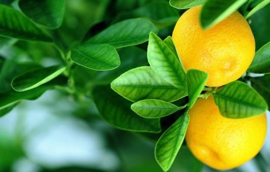 Фотообои Оранжевые апельсины