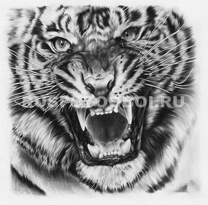 Фотообои Тигр рисунок