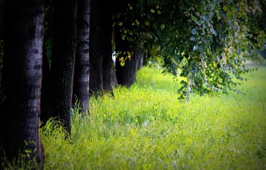 Трава в аллеи