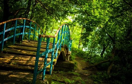 Фотообои Мос в лесу