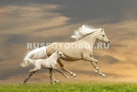 Белая лошадь с жеребенком