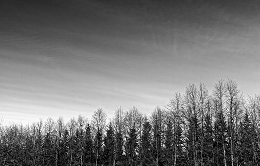 Фотообои Черно-белый лес