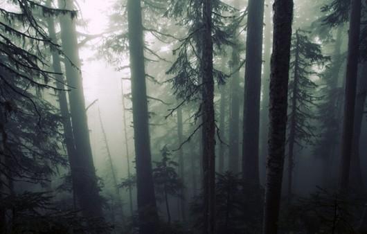 Деревья в мрачном лесу