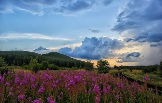 Фотообои Пейзаж поля