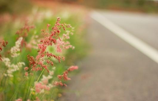 Фотообои Макро трава