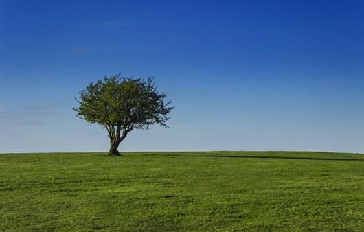 Фотообои Дерево в поле