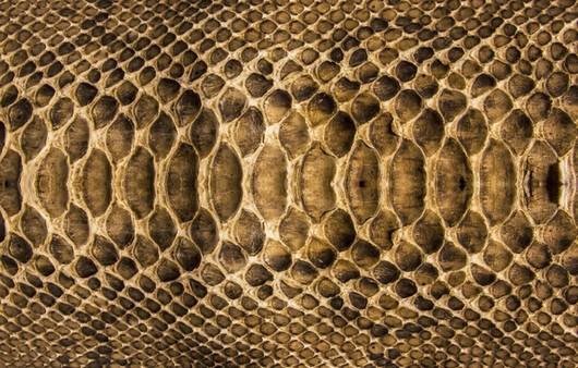 Текстура змеиной кожи